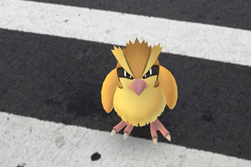 Jogadores de Pokémon GO encontrarão menos Pidgey, Rattata e Zubat