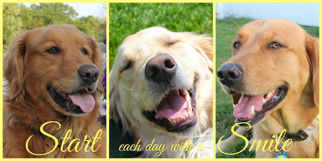 Sugar the golden retriever's birthday blog hop, golden woofs