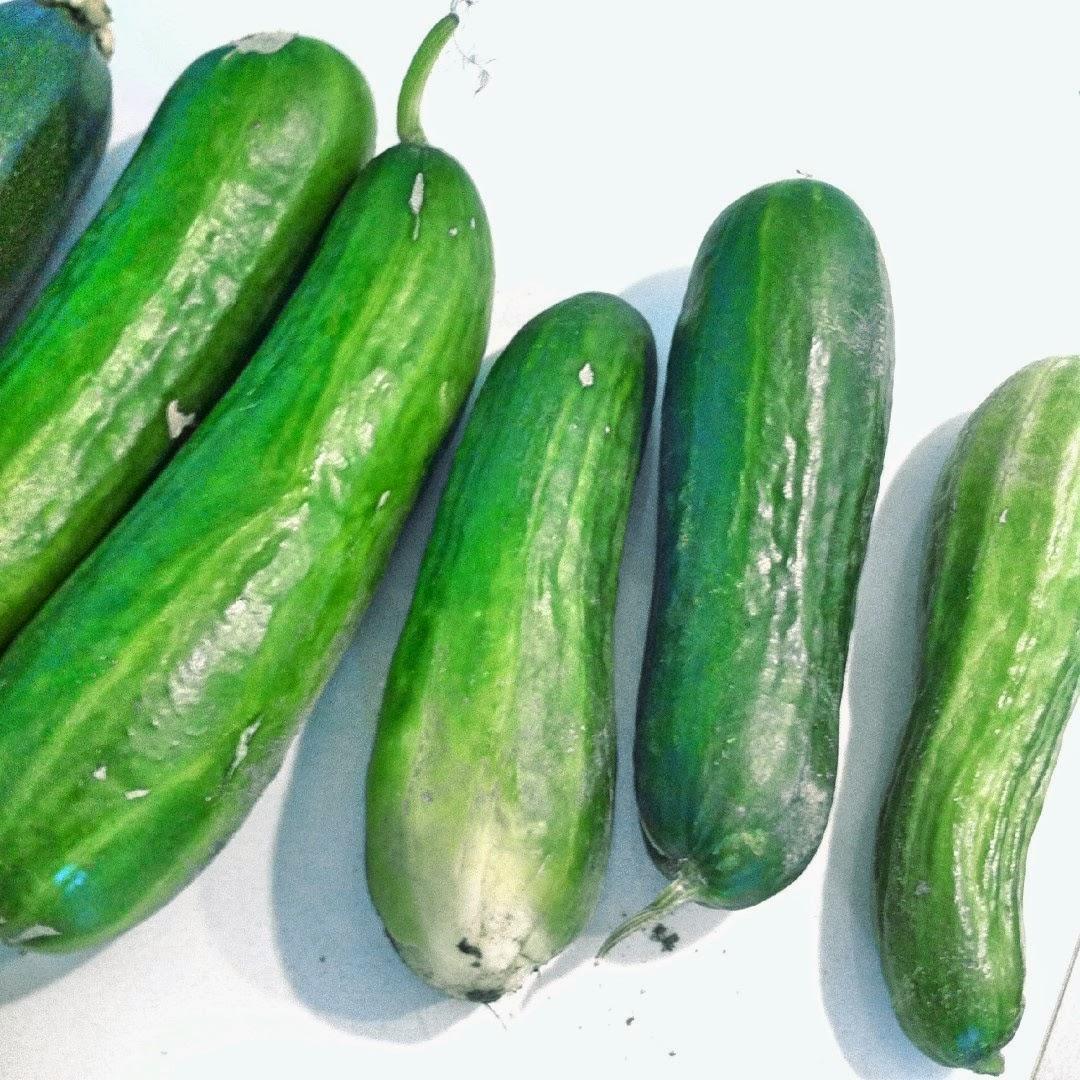 Komkommer uit de moestuin