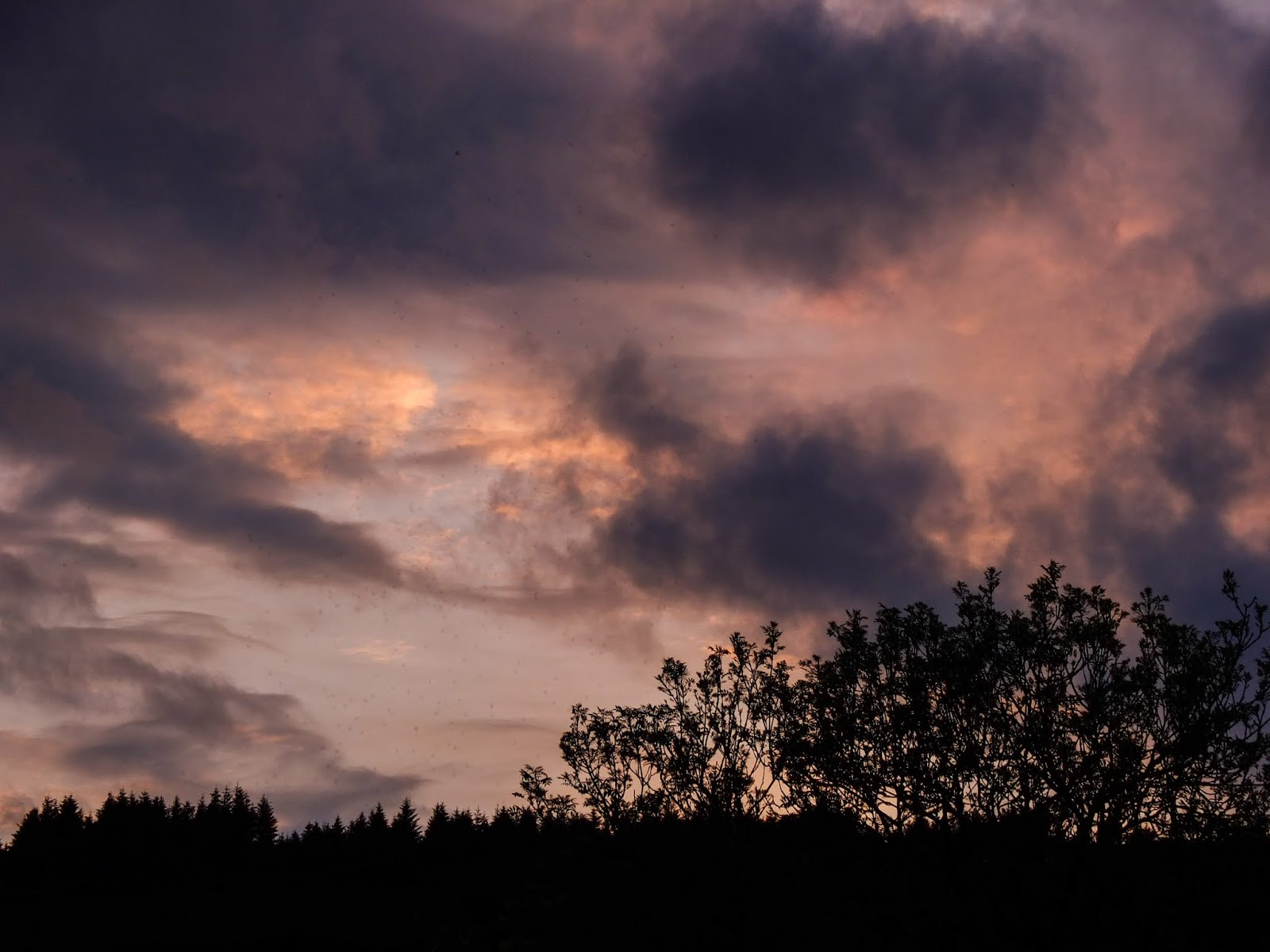 Dark purple and pink clouds with forestry and other tree branches at sunset.