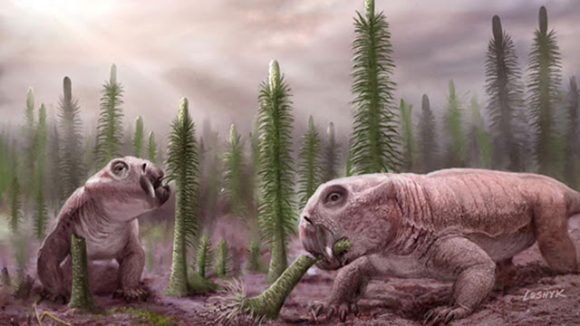 Mass extinctions led to low species diversity, dinosaur rule