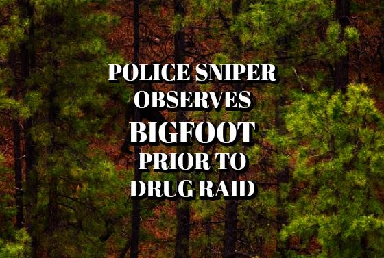 Police Sniper Observes Bigfoot Prior to Drug Raid