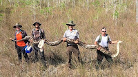 American scientists have seized an extraordinary python in the Everglades in South Florida.