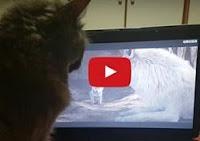 Απίστευτο: Γάτα από την Λέσβο βλέπει τον