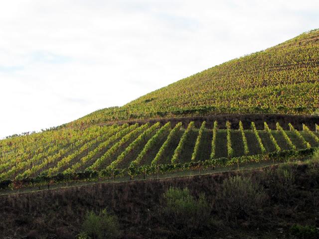 paisagem das vinhas no Outono