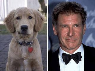 los dobles de los famosos - humor - Harrison Ford