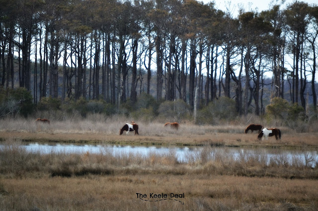 Wild Horses Assateague Island, Maryland