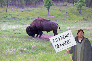 Is it a buffalo or a bison?