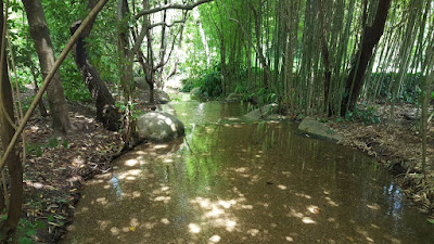 (Almost) Wordless Wednesday - a walk in the park, The Gulbenkian Gardens, in Lisbon.