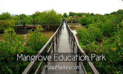 Wisata hutan mangrove bangkalan