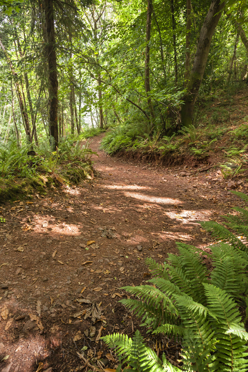 Coastal path through Culbone Wood in Exmoor by Martyn Ferry Photography