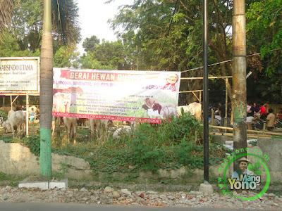 FOTO 1 :  Jelang Idul Adha, Penjual Hewan Kurban Mulai Bermunculan