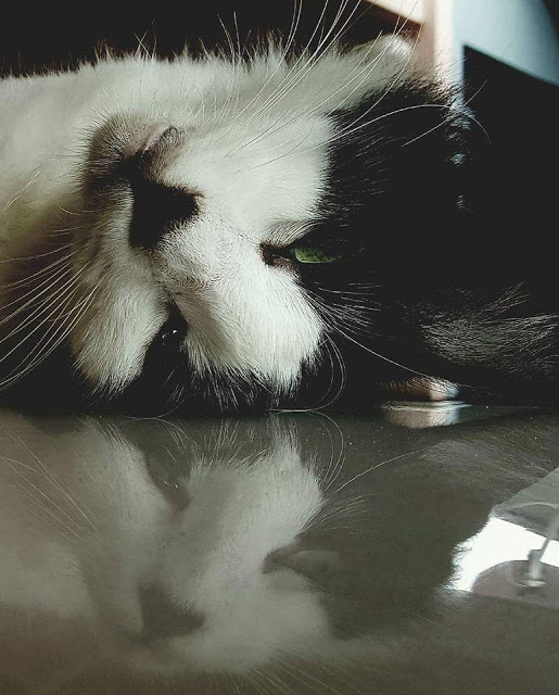 Kucingku Bernama Gemok Telah Hilang