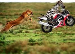 Lawak Batak, Harimau