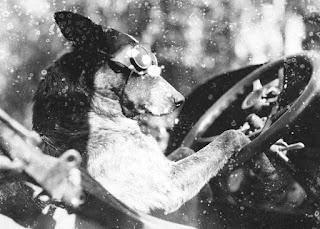 Fotografía en blanco y negro de un perro al volante de un coche antiguo