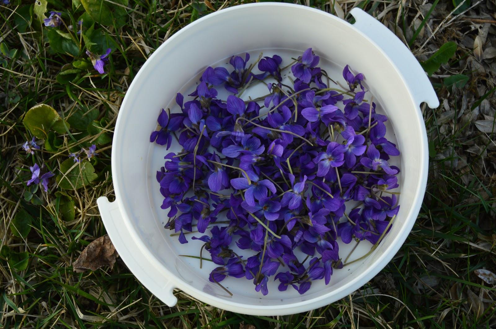 b85982c2b Večer doma sme sa rozhodli fialovú krásu zachovať aj na čas, kedy teplé dni  budú nabádať, aby si človek pripravil chladený nápoj a tak sme si ich  zamrazili.