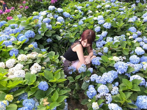 【假掰網美必去拍照戰場】高家繡球花第一園區 (5/27花況分享)