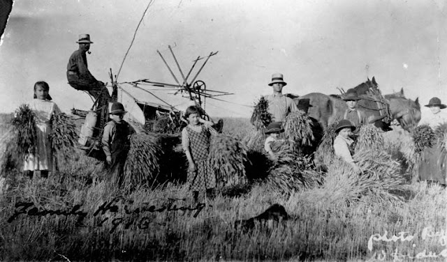 White Ukrainian Family in the Prairies, harvesting time