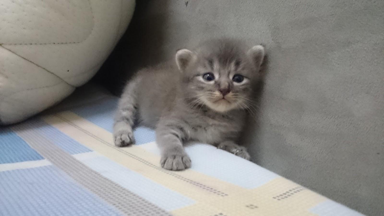 Si Kecik, Kucing Yang Bijak