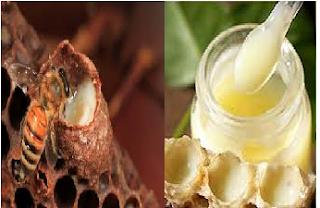 sữa ong chúa tươi nguyên chất chưa chế biến