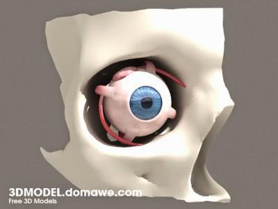 DOMAWE net: Eye - Free 3D Model