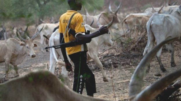 Suspected Herdsmen Kidnap Three Edo State Teachers Returning from School...See Details