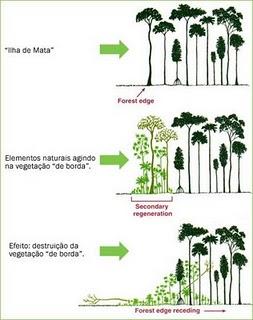 Efeito de Borda em Ecologia