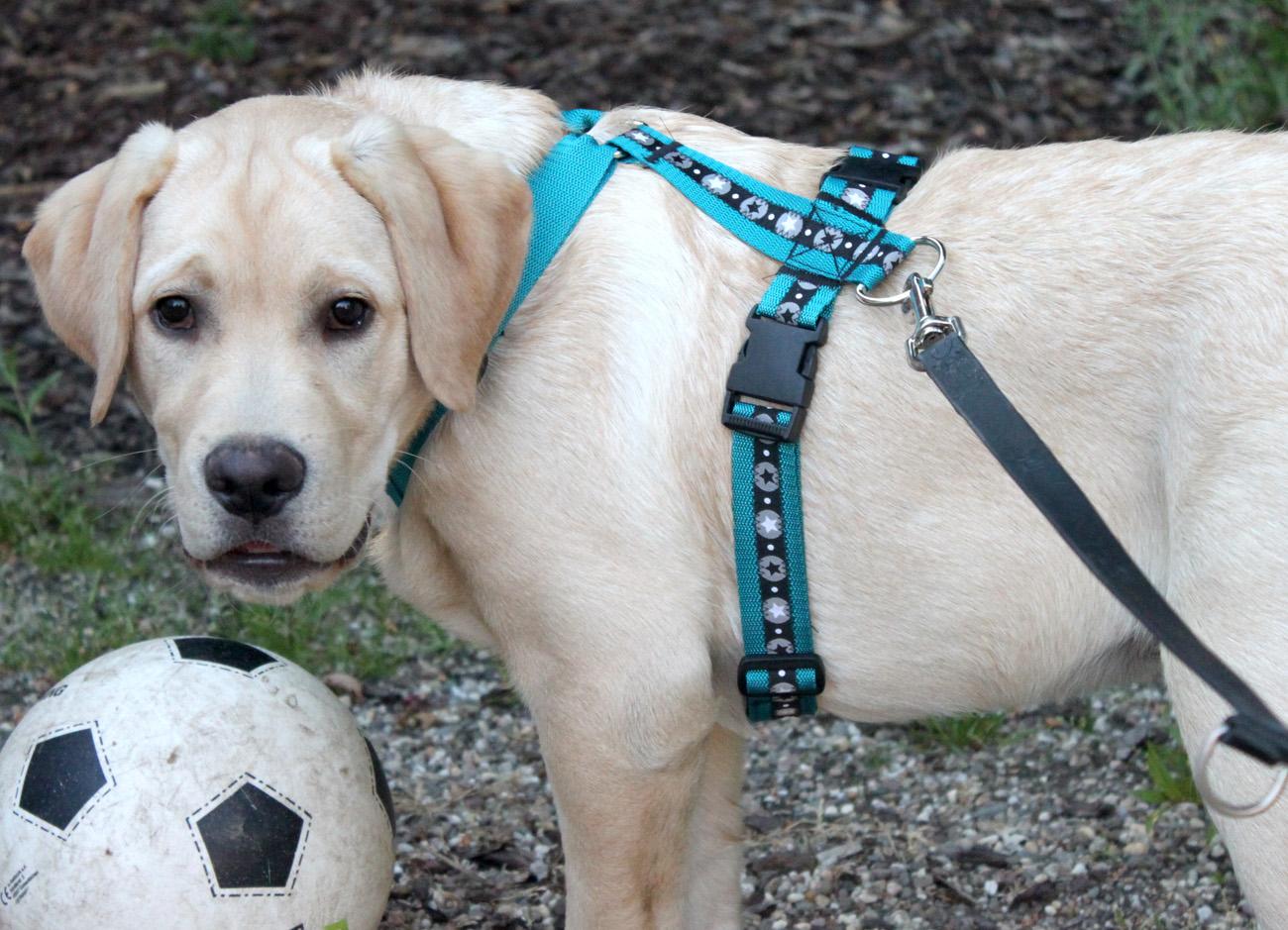 Nähen für den Hund: ein Hundegeschirr - Pepelinchen - Der Nähblog