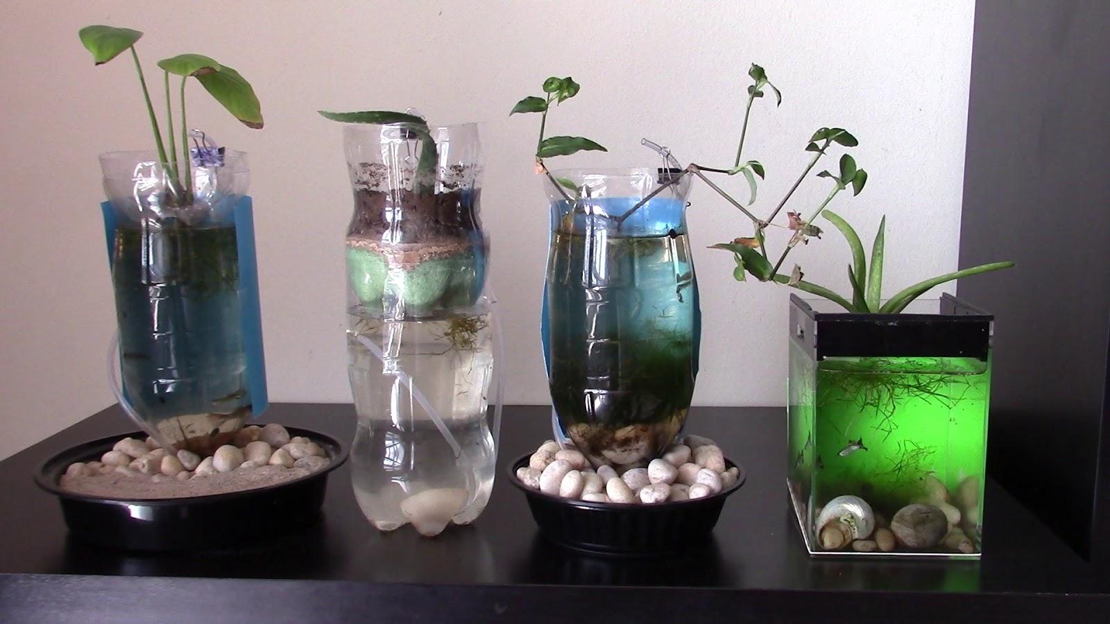 Random bits caring for fish in aquarium of plastic bottle for Plastic fish tank