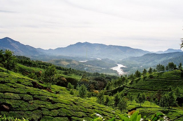 Munnar - The most sought after tourist destination in South India