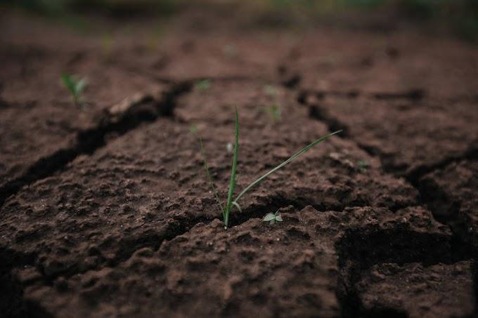 Vegetação começa a crescer sobre lama em Brumadinho; veja imagens