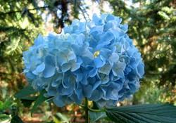 рецепты из цветов