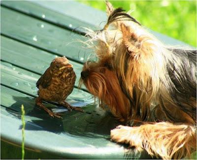 Foto de coleccion: perro y pajarito