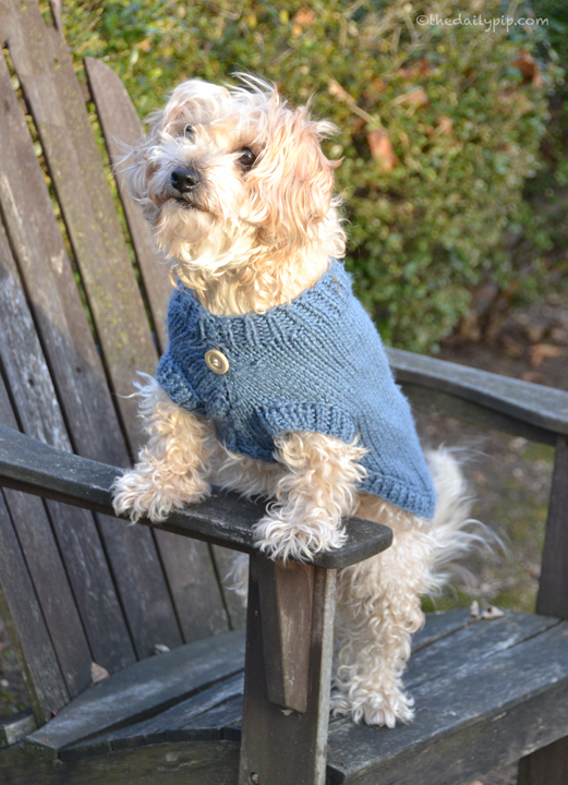 Ruby models the latest in doggie sweaters