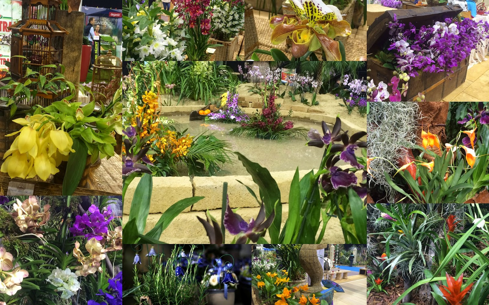 Gardenexpo 2015 Orchidea ünnep