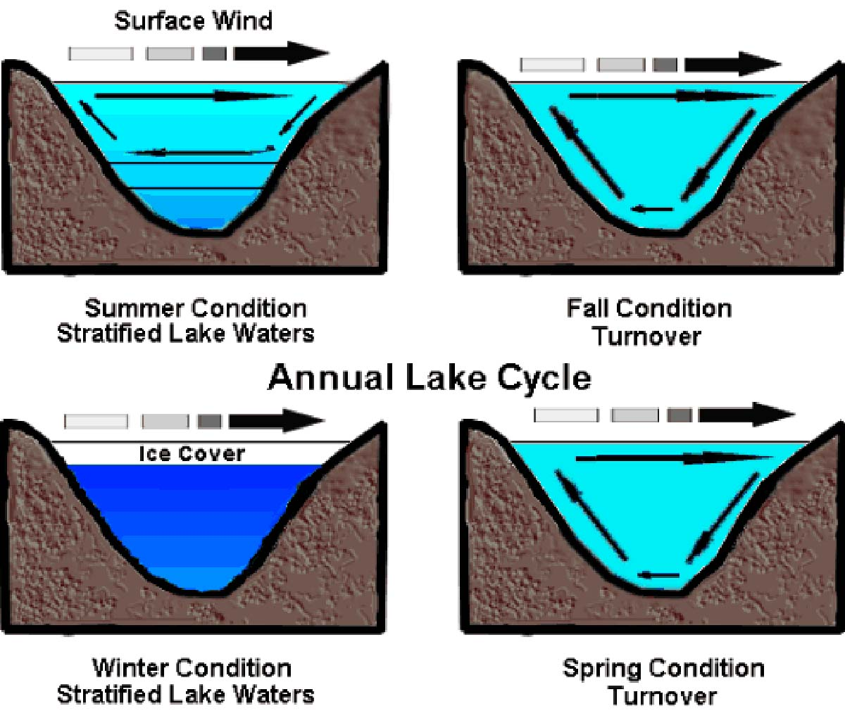 The Agatelady: Adventures and Events: Lake Turnover