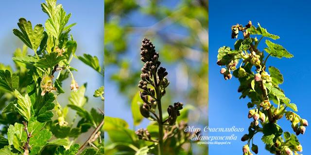 майское цветение