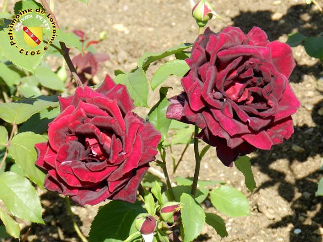 VILLERS-LES-NANCY (54) - La roseraie du Jardin botanique du Montet - Rose Papa Meilland