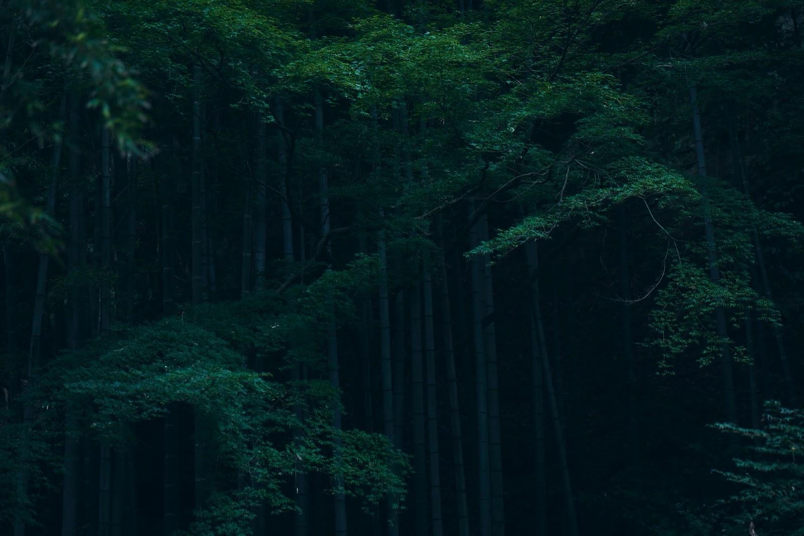 the land of Ayaka: 鎌倉 2015年7月29日水曜日 鎌倉 からんからんからん