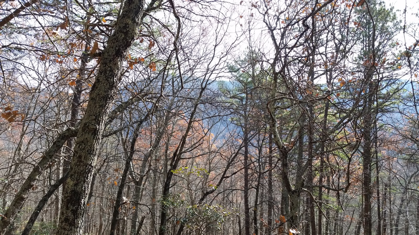 Glass House Patc Cabin : Quot lee challenge hike all the trails in george
