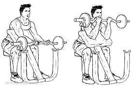 preacher-bench-curl-exercise
