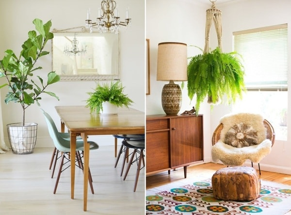 The Best Plants To Decorate Interiors 10