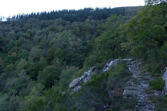 Bosque del Silencio - Los Oscos