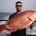 Cara Jitu Memancing Ikan Dengan Cepat dan Mudah