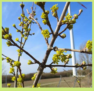 Es ist endlich Frühling