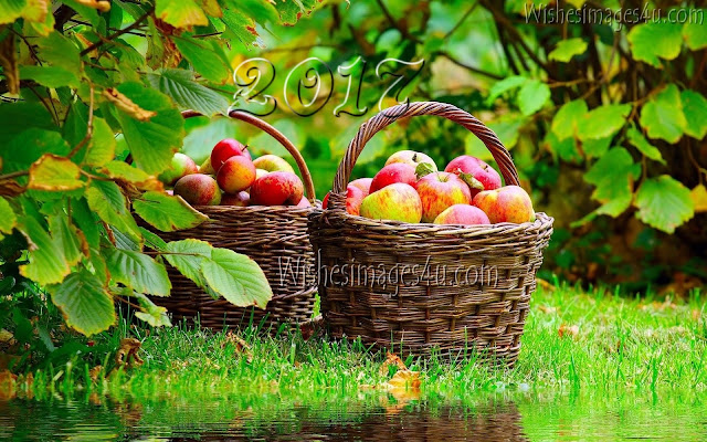 Happy New Year 2017 Beautiful Latest HD Nature Pictures Download For  Desktop
