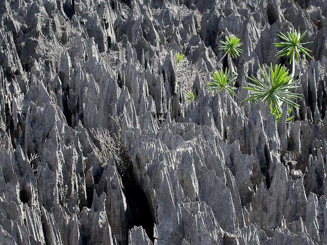 détail des tsingy