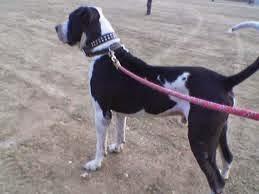 जानिये घरों में कुत्ते क्यों पाले जाते है - Janiye gharo me kutte kyo paale jaate hai