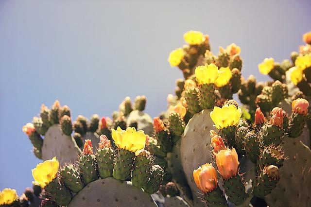 xuong rong no hoa dep nhat