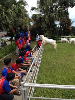 Peternakan kambing etawa garuda farm
